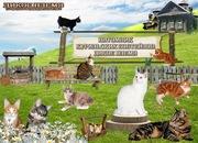 котята курильского бобтейла - питомник