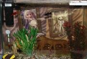 аквариум+рыбки+комплектующее