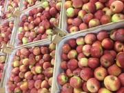 Школьное яблоко – 0, 18 евро / кг.