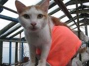 Молодая кошечка с котенком ищут новый дом