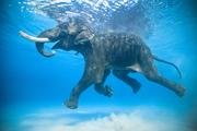 Арт-путешествие на Андаманские острова (Индия),  20 янв-2 февр 2015