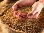 Продается кормовое зерно.