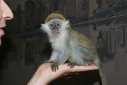 Встречаем Новый Год с обезьянкой в Челябинске