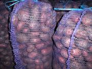 Картофель,  овощи с доставкой