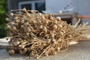 Продаю травы засушенные