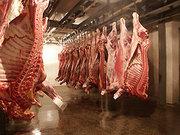 Мясо говядины замороженное оптом